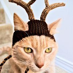 Rendieren kostuum voor katten  Hand breien kat hoed