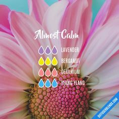 The ultimate essential oil blend software! Create your aromatherapy blends or search through our extensive list. Calming Essential Oils, Essential Oils Guide, Essential Oil Diffuser Blends, Essential Oil Uses, Doterra Essential Oils, Cedarwood Essential Oil, Essential Oil Combinations, Essential Oil Perfume, Aromatherapy Oils