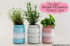 Beautiful Herb Garden Mason Jars - a pretty way to display your favourite herbs in your house!