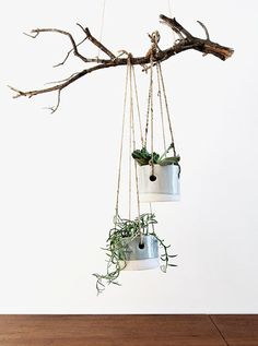 i just need a branch for my cutie tin can pots