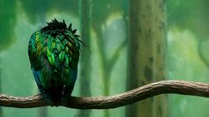 Bird – 1080p HD Wallpaper