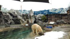 Loksha Tours was in Sea World, Gold Coast. Polar Bear. Book your next Gold Coast Tour with Loksha. https://lokshatoursydney.rezdy.com/5689/sydney-gold-coast-brisbane-5-nights-6-days