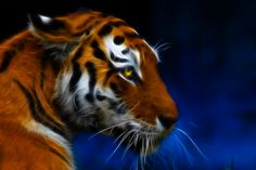 Fractal Tiger by RichardatUK.deviantart.com on @deviantART