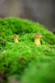 wildly simple: Thinking Green.  moss & mushrooms