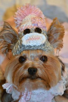 Yorkie withcute sock monkey toboggan ♥
