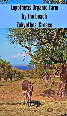 Logothetis Organic Farm with a view in Zakynthos, Greece