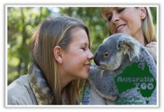 Koalas at Australia Zoo - Bindi Irwin Australian People, Bindi Irwin, Preserve, Families, Remote, Survival, Nutrition, Tours, Culture