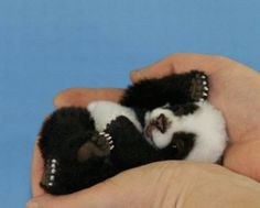 ohmygod its so tiny. I want a baby panda...