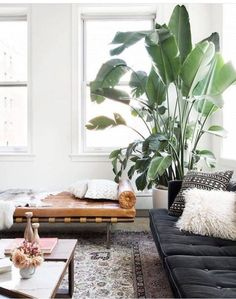 Plants purify air for us. Decorating living room with Indoor plants makes us feel more comfortable and relaxed. Indoor plants are those that can live with minimal or no sunlight. Here are some of the ways to decorate indoor plant in living rooms. My Living Room, Home And Living, Living Room Decor, Living Spaces, Modern Living, Living Area, Plants In Living Room, Minimalist Living, Simple Living