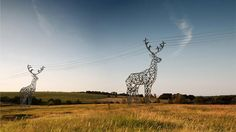 deer power line towers