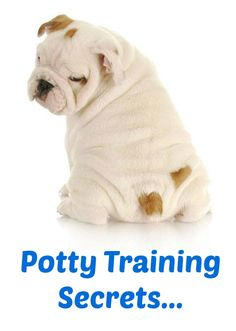 House training a puppy is important for the well being of your puppy and for your own sanity. The lack of house training is the number one reason that dogs wind up neglected, abandoned, or in animal shelters, but it's the failure of t Puppy Potty Training Tips, Dog Training Methods, Training Your Dog, Best Puppies, Funny Dog Pictures, Bulldog Puppies, Bulldog Pics, Dog Names, Hands