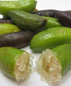 Fruit délicieux et original d'Australie : Citron caviar - Microcitrus australasica - Lime d'Australie