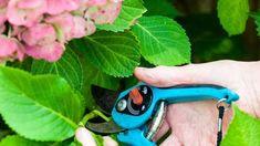 Fotonávod: Rozmnožte si hortenzie - Pluska.sk Pruning Shears, Garden Tools, Round Sunglasses, Round Frame Sunglasses, Gardening Scissors, Yard Tools