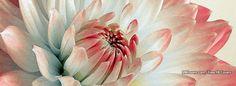 Flowers Macro 36 Facebook Covers