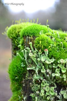 GORGEOUS moss and lichens! Such a rich image full of life. Moss and Fungi by sw Mini Terrarium, Reserva Natural, Plant Fungus, Moss Garden, Mushroom Fungi, Plantation, Natural World, Garden Inspiration, Shrubs