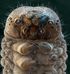It could be the brother of the creature above, but this is actually a silkworm moth caterpillar