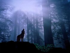 well it's my first ever one i found it off of a program and i thought it realy looked cool i hope you enjoy lol OMG it's a WOLF! shadow wolf in the mist Tier Wallpaper, Wolf Wallpaper, Animal Wallpaper, Wallpaper Backgrounds, Wallpaper Desktop, Wallpaper Maker, Forest Wallpaper, Black Wallpaper, Nature Wallpaper
