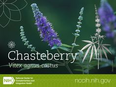 Chasteberry has been used for thousands of years, mostly by women to ease menstrual problems and to stimulate the production of breast milk. Currently, chasteberry is still used as a folk or traditional remedy for menstrual problems, such as premenstrual syndrome, as well as for symptoms of menopause, some types of infertility, and acne. Learn more about the science and safety of this herb: http://1.usa.gov/1MuD5lH