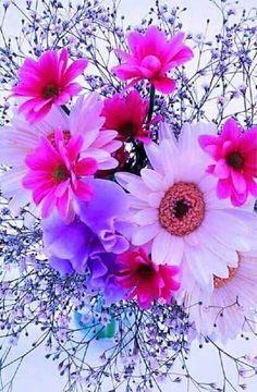 Beautiful Flowers Garden, Beautiful Flower Arrangements, Exotic Flowers, Amazing Flowers, Pretty Flowers, Colorful Flowers, Pink Flowers, Flower Iphone Wallpaper, Flowery Wallpaper