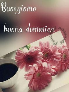 Belle Whatsapp Domenica 00276 Good Morning Good Night, Morning Quotes, Happy Sunday, Italian Memes, Ely, Facebook, Stickers, Nice, Messages