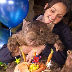 Oldest swinger: World's oldest wombat joins Tinder