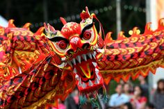 Chinese Dragon Parades are a staple of the New Year celebrations