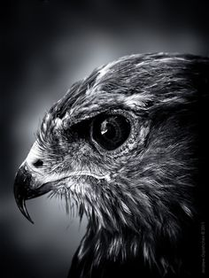raptor of some sort... beautiful pic!!! Rarely do I see a photo with this level of detail of the eyes.