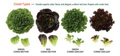 The Newest Innovation in Salad Mix  Grow like a head lettuce, Prepare in one cut, Market as a salad mix