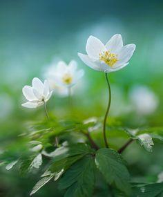 Spring by Laura Pashkevich Amazing Flowers, Wild Flowers, Beautiful Flowers, Elegant Flowers, Macro Photography, Landscape Photography, Plant Fungus, Fotografia Macro, Bouquet