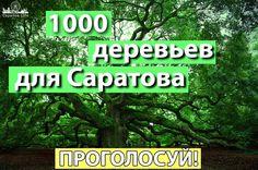 В Саратове могут высадить 1000 деревьев из питомника  Российский питомник деревьев «Экоплант» запустил ко Дню Победы Всероссийскую акцию «Аллея славы», в рамках которой высадят в разных городах 9 тысяч деревьев.  Решить в каких города появятся деревья предложили с помощью голосования, чтобы оно было честный города поделили по численности населения.   Для того, чтобы в Саратове вошел в 5 победителей в своей категории необходимо набрать всего 1000 голосов. Итоги подведут 30 апреля Голосуйте на…