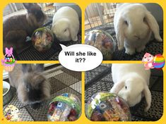 3/28/18 LOOK WHAT WE´VE BOUGHT FOR MOMMY!! What do you think? Will she be happy? She just luuuuuuuuvs chocolate, and we wanted to buy her some goodies for Easter! We think it smells funny, not like our hay cakes or papaya tablets, but we´ll have to take a chance on this one! HAPPY EASTER MOMMY -WE LOVE YOU!! From your boys Duncan & Dexter :) Thihihihihi !!!