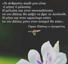 Greek Words, Greek Quotes, Wisdom, Greeks, Pictures, Quotes, Greek Sayings, Photos, Photo Illustration