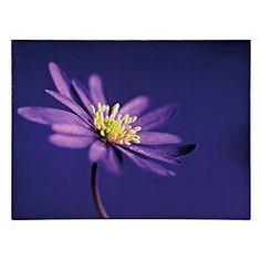 Purple Flower Canvas 60X80Cm
