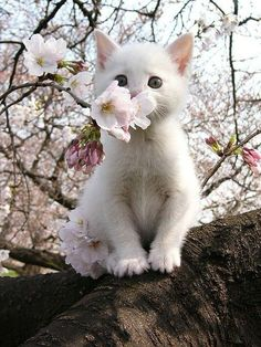 Springtime kitty <3: Cats, Animals, Kitty Cat, Pet, Kittens, Flower, White Cat