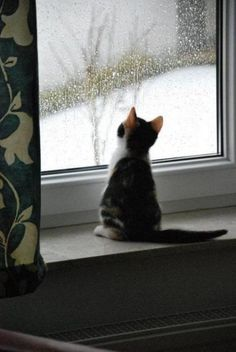 15 Cats Gazing Out The Window And Looking Cute - CutesyPooh