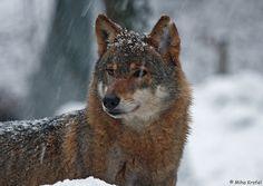 snowing | Flickr - Photo Sharing!