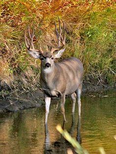 Deer Hunting - A Beginner's Guide!