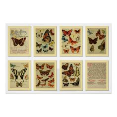 Poster, Beautiful vintage butterflies of America, made from a 19th century 8 pages advertising brochure from a tea and coffee import company.