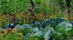 Forest garden with over 500 edible plants requires only a few hours of work monthly<br> For those who havent seen this yet, check it out. Forest Plants, Forest Garden, Lawn And Garden, Rain Garden, Garden Trees, Edible Plants, Edible Garden, Nitrogen Fixing Plants, Natural Ecosystem