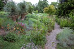 Two Yucca rostratas stand sentry in The Gravel Garden at Chanticleer.