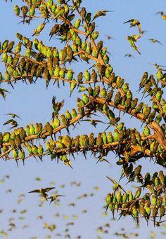 Ravenwhimsy's Wonderful World Photo is part of Exotic birds - Beauty is my muse Pretty Birds, Beautiful Birds, Animals Beautiful, Beautiful Places, Beautiful Pictures, Exotic Birds, Colorful Birds, All Birds, Love Birds