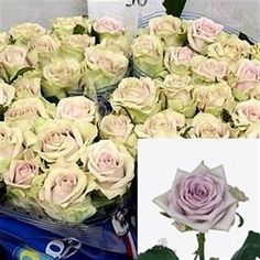 Fifth Avenue Roses - 2018 Wedding Trend: Ultra Violet Purple. For lilac and purple wedding flowers to suit your colour scheme, visit our website at www.trianglenursery.co.uk/fresh-flowers!
