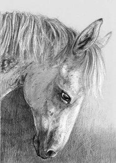 Illustratrice naturaliste & dessin animalier: Matador de FSH