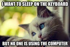 First World Problems Cat #laughterheals