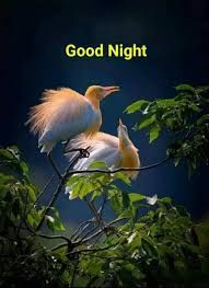Good Night Images Wallpapers for Whatsapp Good Night Friends, Good Night Wishes, Good Night Quotes, Good Morning Good Night, Good Night Images Hd, Night Photos, Good Morning Images, Pictures Images, Hd Photos