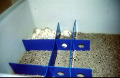 CCAC training module on: environmental enrichment [with various lab animals]