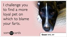 Search results for 'dogs' Ecards from Free and Funny cards and hilarious Posts | someecards.com