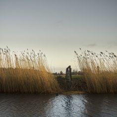 De Peppels Photo Blog | sloot met riet | reed and water