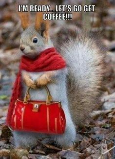 Why is this squirrel abouta get a cup of coffee sooo cute?!?