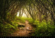 The Unknown - Appalachian Hiking Trail in Fog by Dave Allen Photography, via Flickr